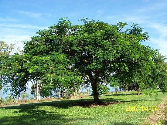 Groote Eylandt, أستراليا: 茂盛的植物