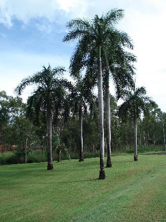 Groote Eylandt, Australia: 植物