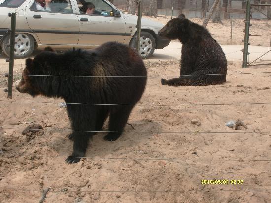 Qinghuang Island Wildlife park: S7300387