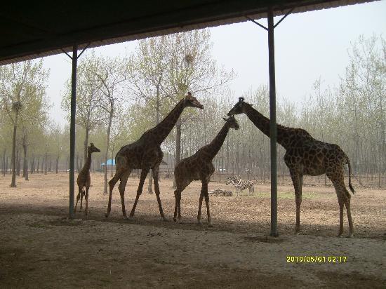 Qinghuang Island Wildlife park: S7300409
