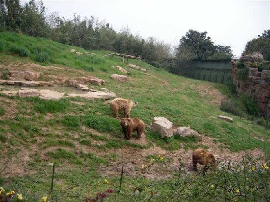 Zhuyuwan Scenic Spot (Yangzhou Zoo): 一家人,棕熊