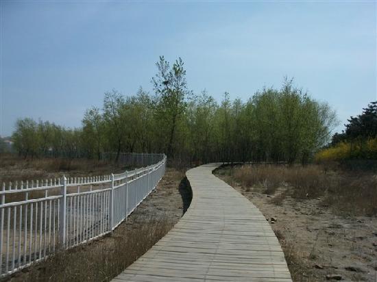 Pigeon Nest Park: 悠长悠长的栈道