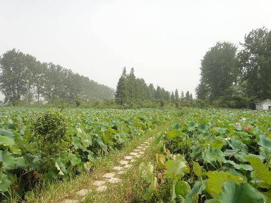 Taoxin Waterside