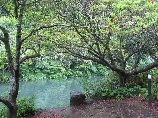 Cheonjeyeon Falls: 河边