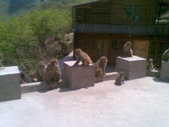 Shennong Mountain