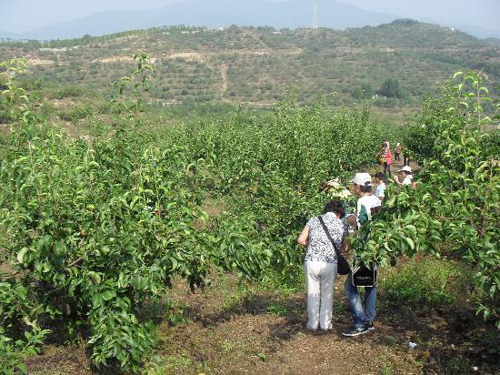 Dandong Dalishu Ecological Tourist Zone