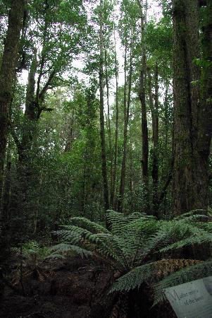 Tasmania, Australia: national park