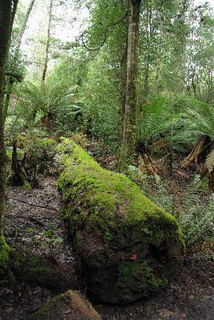 Tasmanie, Australie : national park