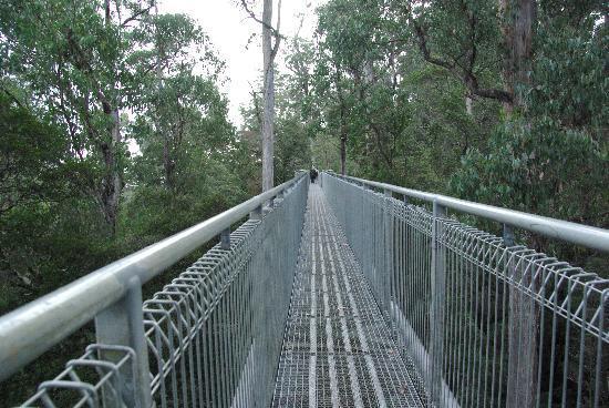 Tazmanya, Avustralya: bridge