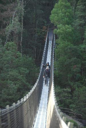 Tasmânia, Austrália: 摇摆的桥