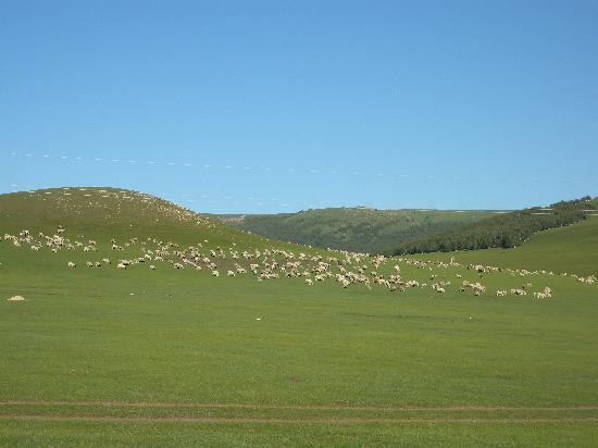 Hexigten Prairie