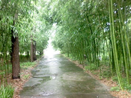 安吉竹博园