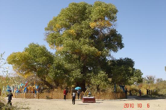 Sacred Tree: DSC08546