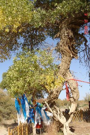 Sacred Tree: DSC08550