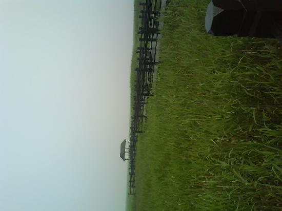 Chongming Dongtan Natural Reservation: DSC00718