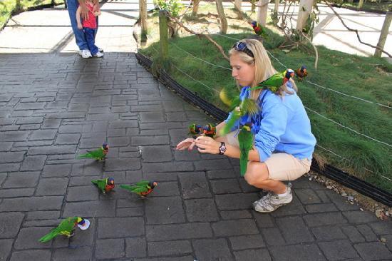 Columbus Zoo and Aquarium: 鹦鹉