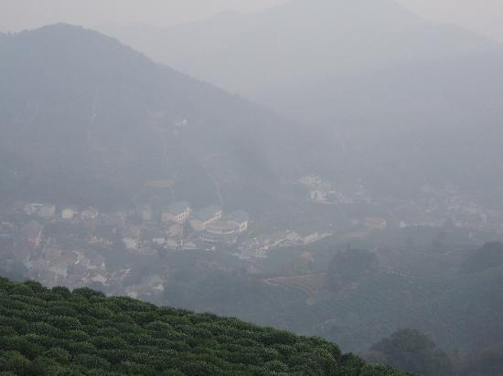 Longjing tea fields : 雾里的龙井村