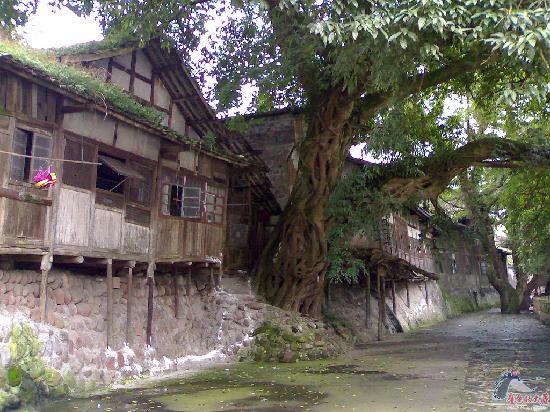 Chengdu, China: 吊脚楼古榕树
