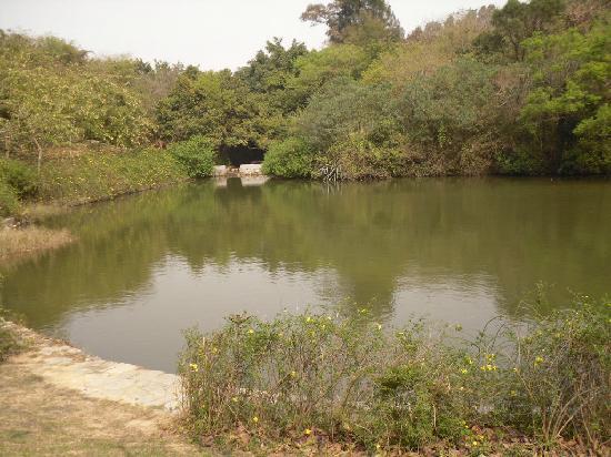 Forest Park, Quanzhou: SDC15975