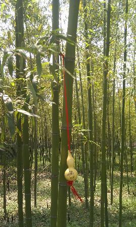 Anji Bamboo Museum Garden