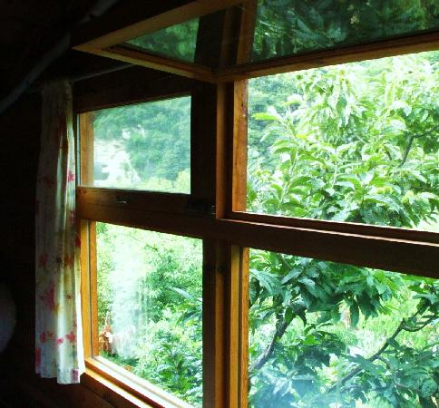 Huairou Mountain Bar: 窗外栗子树