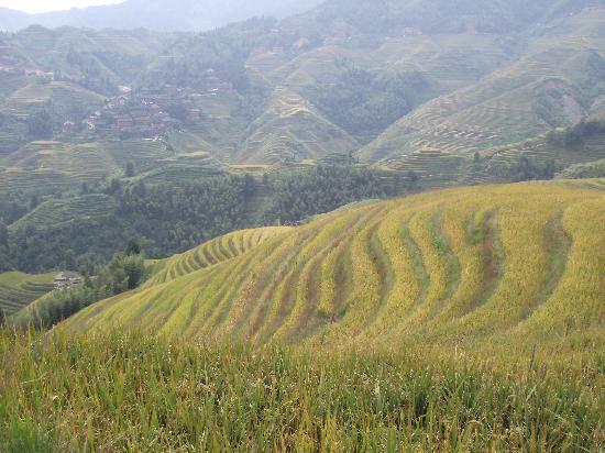 Dragon's Backbone Rice Terraces: DSCF0926
