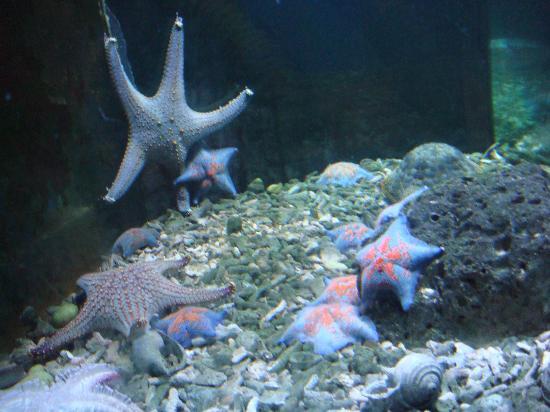 Ocean Aquarium of Penglai : DSC03096