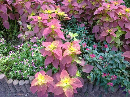 Guyi Garden: 20111006084
