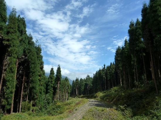 Jiguanshan Scenic Resort: 崇州鸡冠山风景26