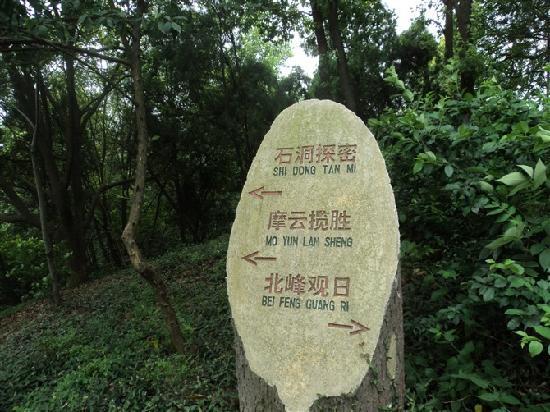 Songjiang Tianma Mountain: T2