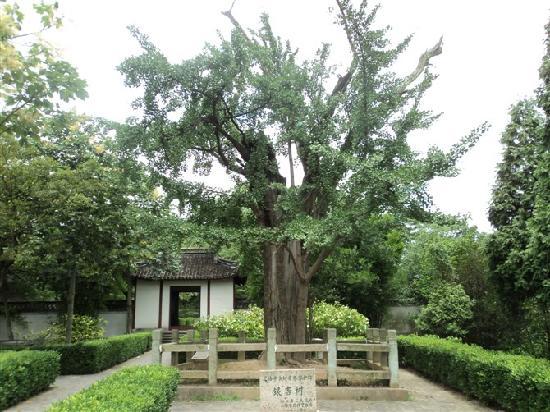 Songjiang Tianma Mountain: T9
