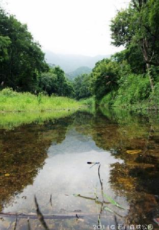 Shimen Forest Park : 景3