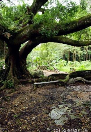 Shimen Forest Park : 景5