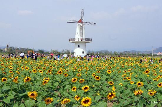 Jocund Farm: 欢乐佳田农场