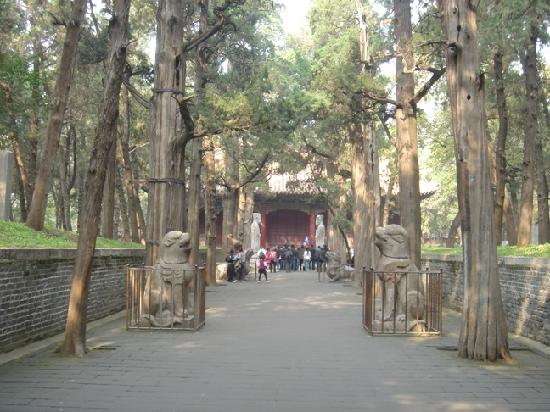 Kong Forest