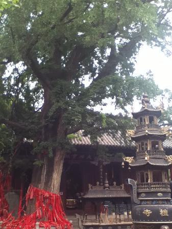 Qingtan Temple: 青檀寺