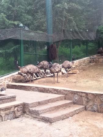Baodugu Forest Park: 抱犊崮
