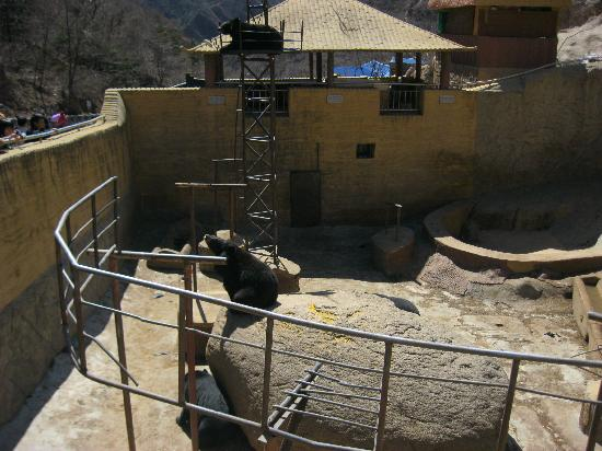 Yanqing Badaling Bear Park: IMG_3812