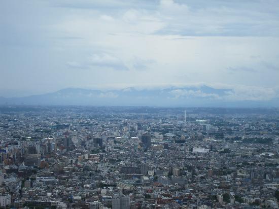 Tokyo Metropolitan Government Buildings: IMG_0478