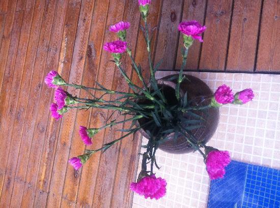 Huifeng Inn Shuhe: 客栈角落的鲜花