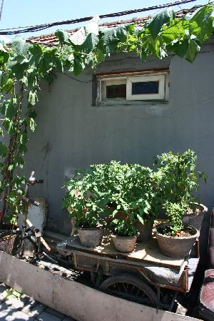 Hutong Impressions Beijing Guesthouse: 胡同一角