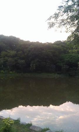 Forest Park, Quanzhou: 里面的一个湖