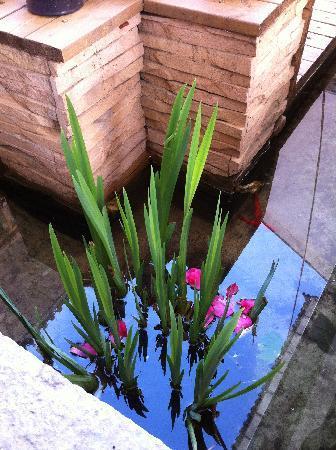 Hotel Des Bai: 院子里的水中落花