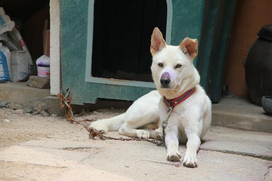 โฮโมโนมัด เกสท์ เฮ้าส์: 可愛小狗