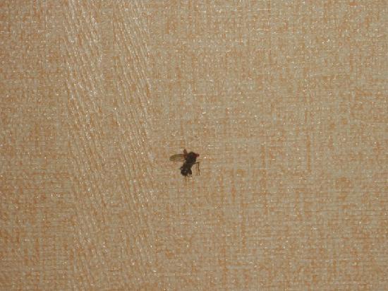 Gelin Hotel : p5四、当晚被不知名的虫咬,打死的虫,走时还在墙上~