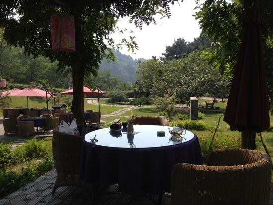 Yunfeng Treehouse: 茗园