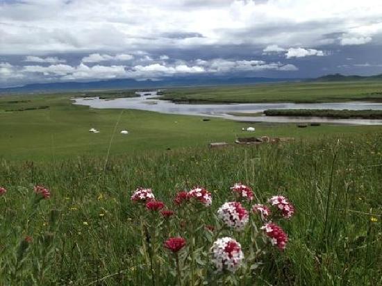 Ruoergai Wetland Reserve : 中国最美 藏区最大的高山草甸草原