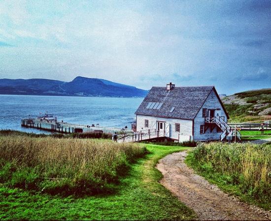 Gaspesie Region, Canada: 鸟岛