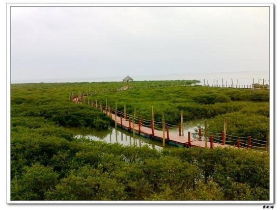 广西壮族自治区合浦县: 小螃蟹在脚下爬来爬去