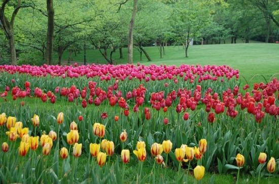 Prince Bay Park: 郁金香